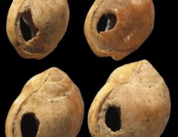 Le blog de Mel Histoire du bijou Les origines de la bijouterie Coquillage de blombos Les Bijoux de Mel artisan Bijoutier Joaillier sur mesure atelier bidart